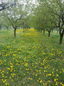 Spring Weg 2 0415
